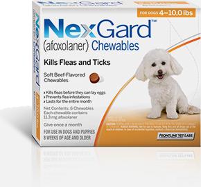 Best and safest flea medicine for dogs